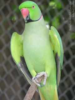 Parrot in Safari Park