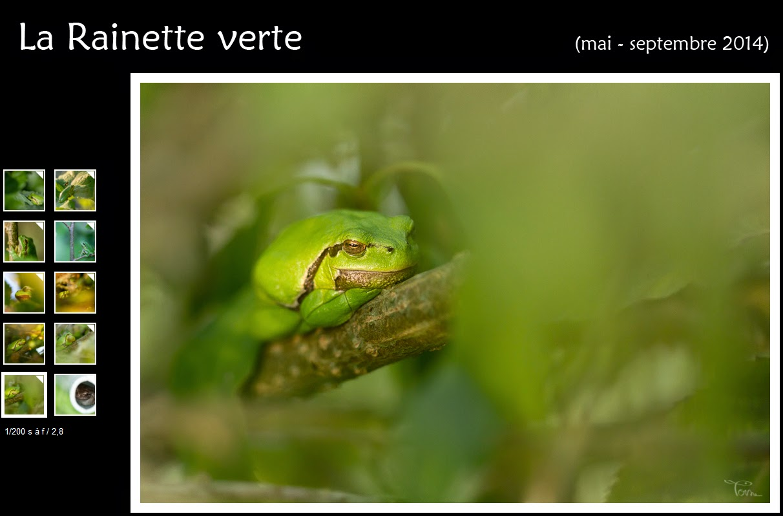 http://instantalautre.free.fr/galeries2014/faune/rainette/