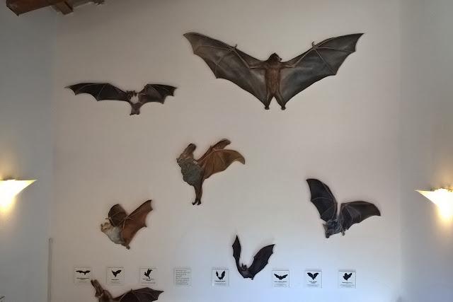 dove poter vedere pipistrelli