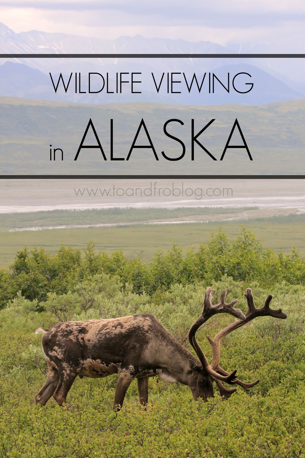 wildlife viewing in alaska