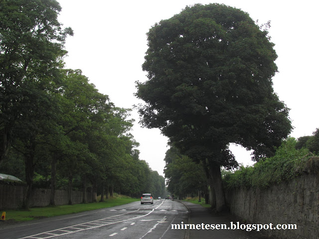 дождливый Дублин