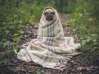 Pengalaman Hadapi Anjing Dengan Mudah Ketika Sedang Berpapasan
