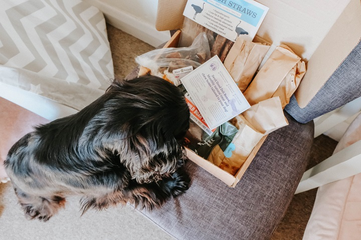 The Best Dog Products