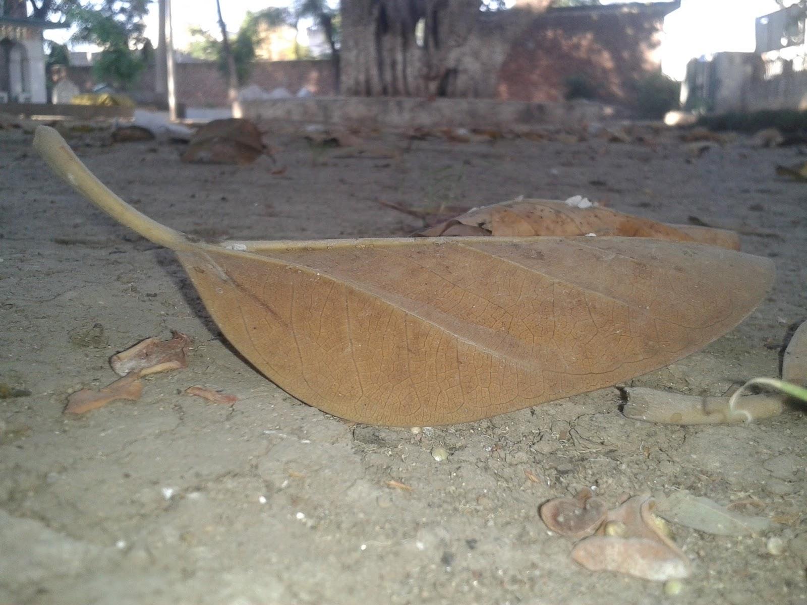 shah-shakoor-sialkot-pakistan-tomb-autumn-1