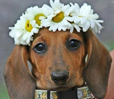 HAPPY SPRING, DOXIE LOVERS