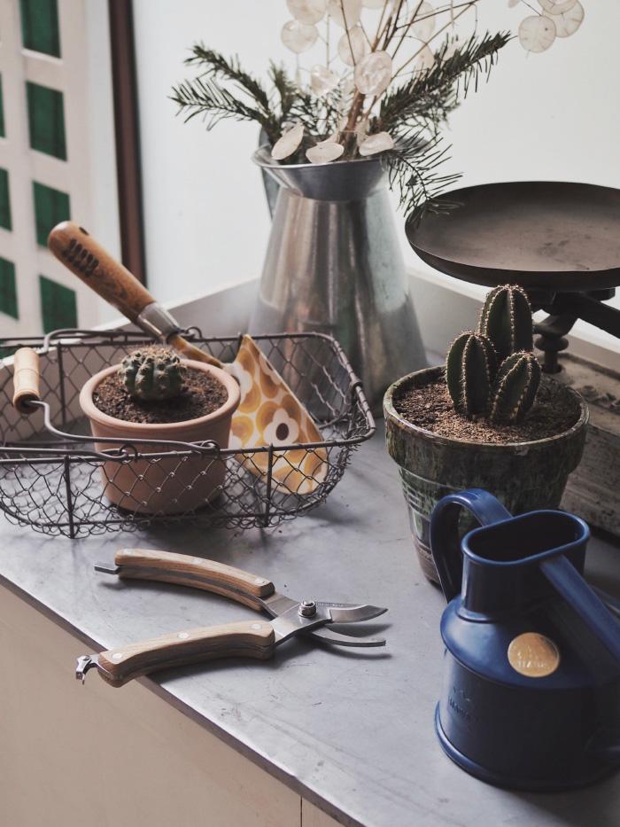 Tailler ses plantes en pot en fin d'hiver