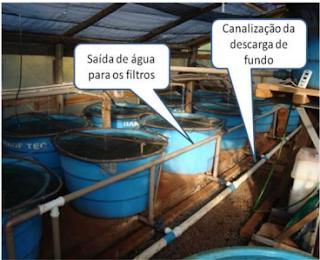 Cria o de peixes em tanques piscicultura online como for Cria de tilapia en casa