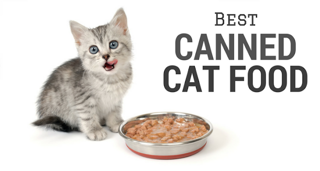 Most Healthy Canned Cat Food