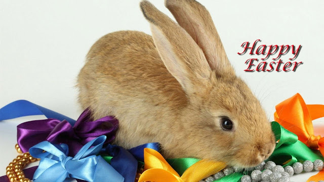 Easter-Bunny-HD-Images