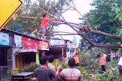 Akibat Angin Kencang, Pohon Besar Dihalaman Eks.Puskesmas Benteng Tumbang
