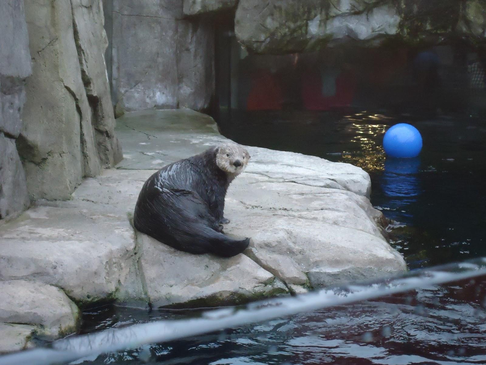 Josh S Biology Blog Vancouver Aquarium