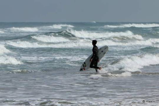 Surfing Israel photos