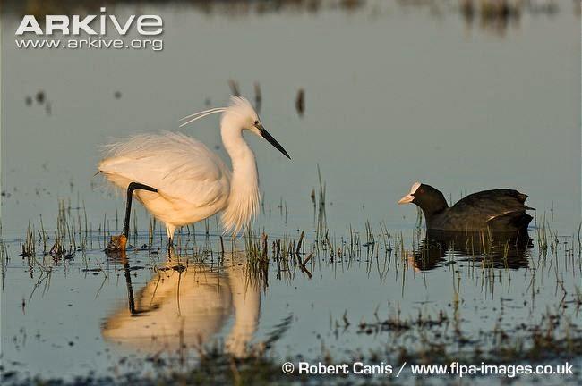 interactions between acuatic birds