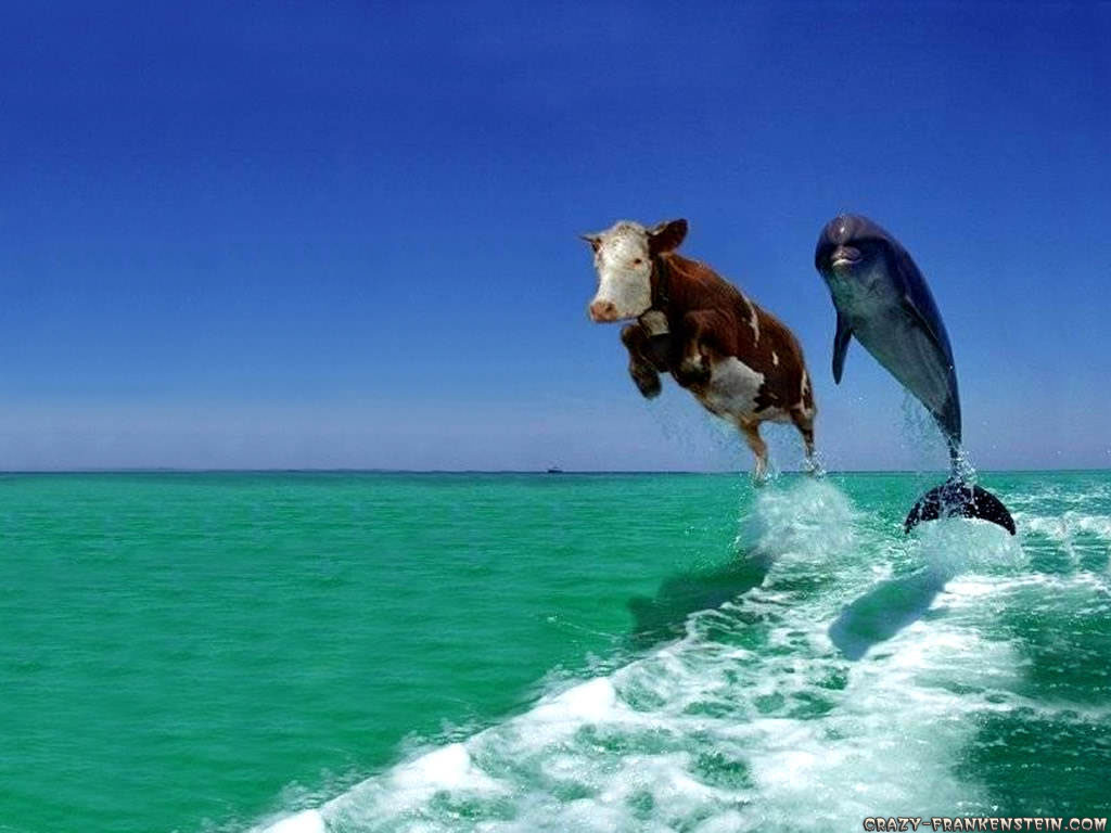 kinds of wallpapers funny animal wallpapers