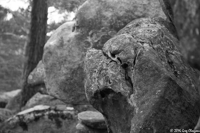 Les chiens d'Apremont, Fontainebleau, (C) 2016 Greg Clouzeau