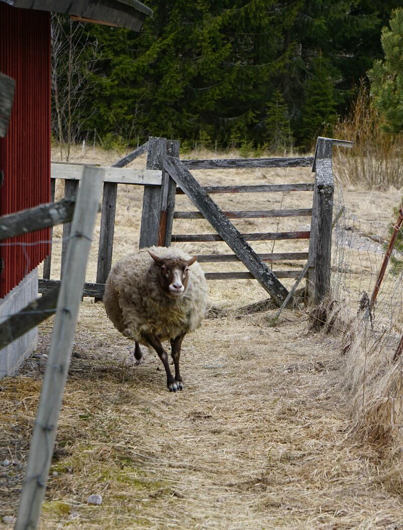 Lammas, maalla