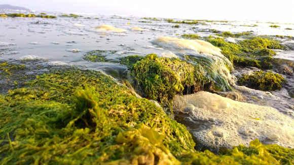 Ketika Air Laut Surut di Pantai Karapyak