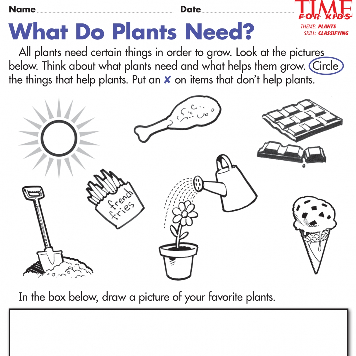 Social And Natural Sciences For Second Grade 17 Plants Worksheets
