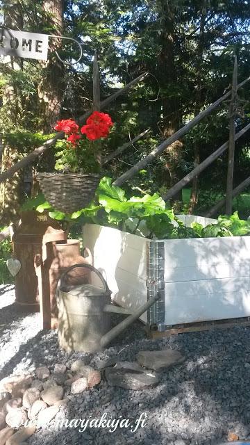 puutarha valkoiset lavakaulukset kukka