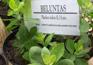 setiap kawasan memiliki nama tersendiri   Beluntas