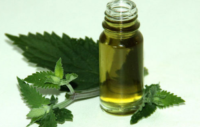 10 Amazing Health Benefits of Catnip Essential Oil
