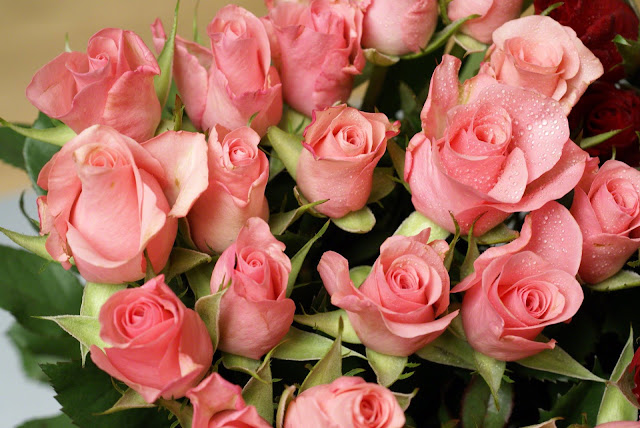 Ý nghĩa hoa hồng màu hồng