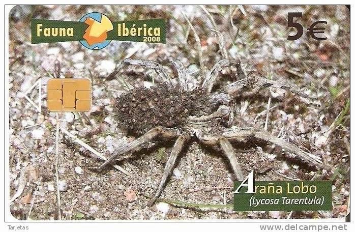 Tarjeta telefónica Araña lobo (Lycosa tarentula)