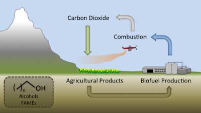 All About Palm Oil Sustainable Biofuels