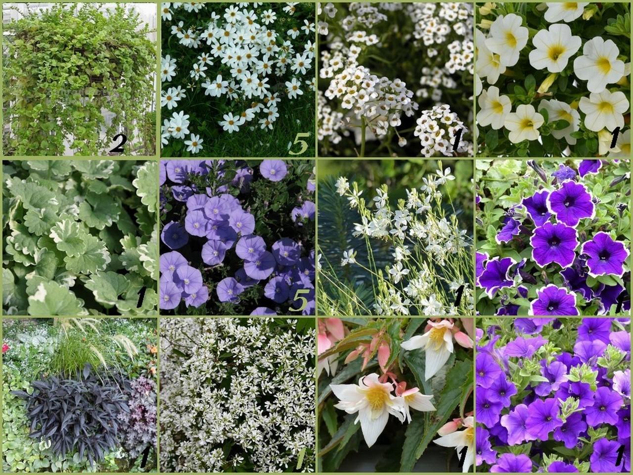Cagouille 39 s garden commande promesse de fleurs for Promesse de fleurs