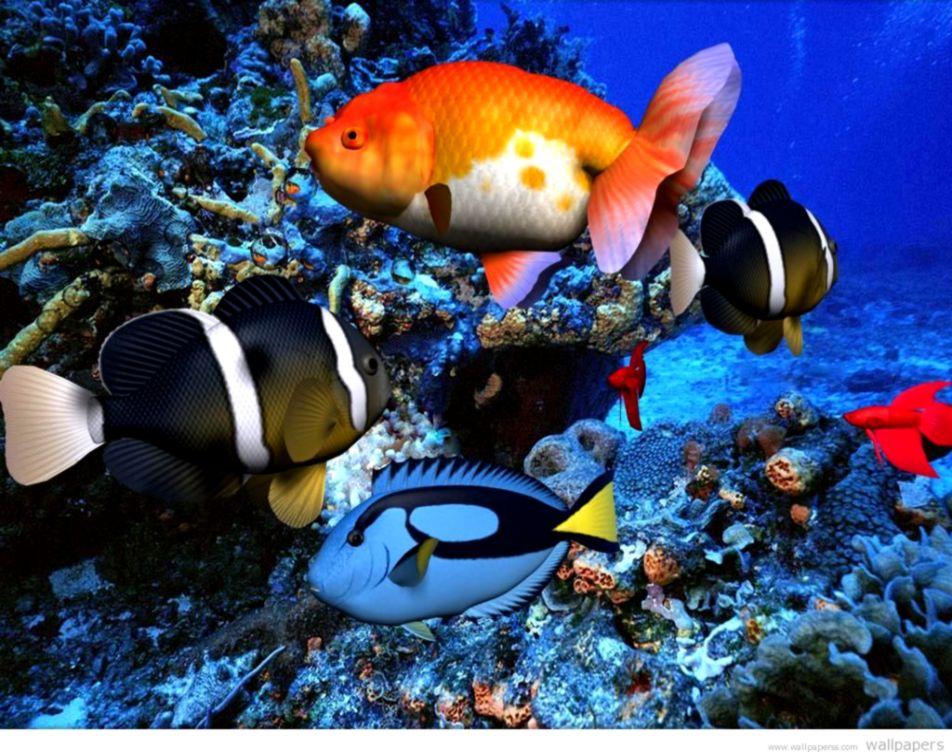 Desktop animated screensavers free download