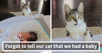 10+ Times Animals Did Things For The First Time, And Had The Funniest Reactions