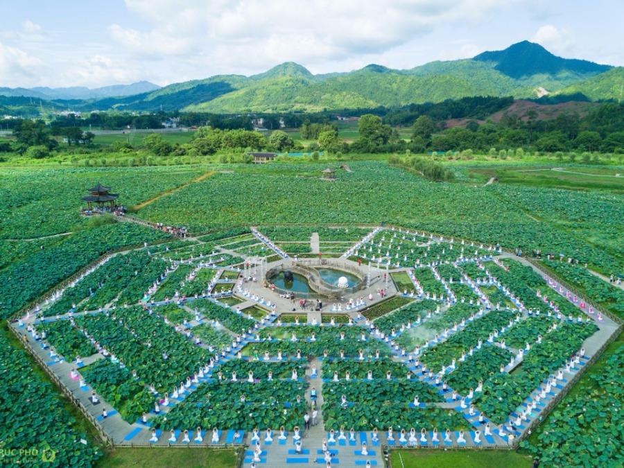 hàng nghìn người tập yoga giữa hồ sen