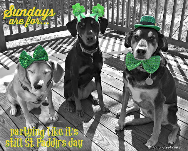 3 rescued dogs wearing St Patricks Day gear