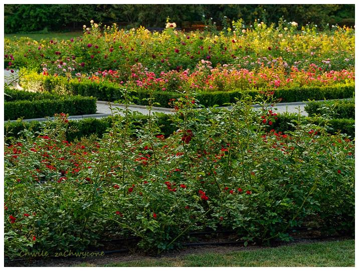 Ogród botaniczny UAM Poznań