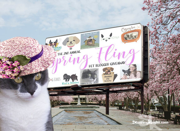 Springtime … When A Cat's Fancy Turns to the Spring Fling Pet Blogger Giveaway!