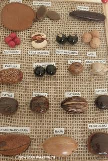 conheça as variedade de sementes da região norte