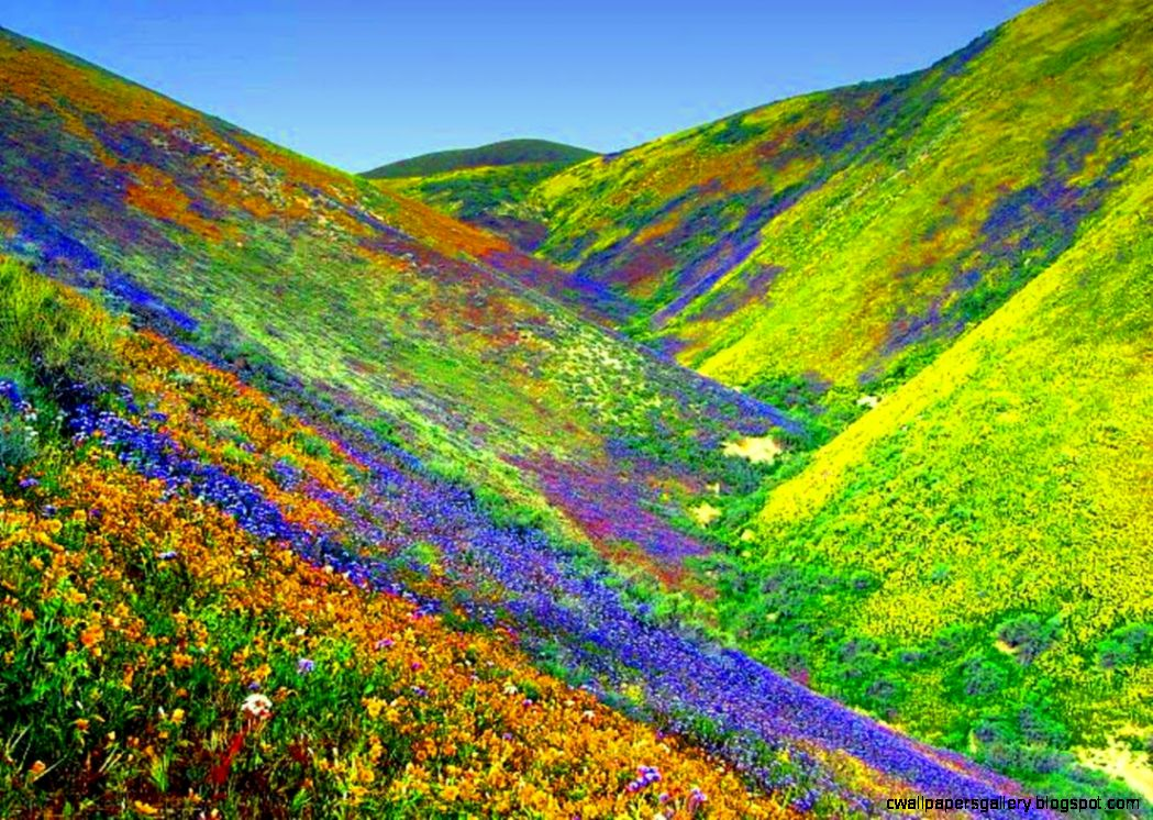 Beautiful Valley Of Flowers | Wallpapers Gallery
