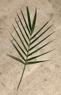 Palm Frond Small