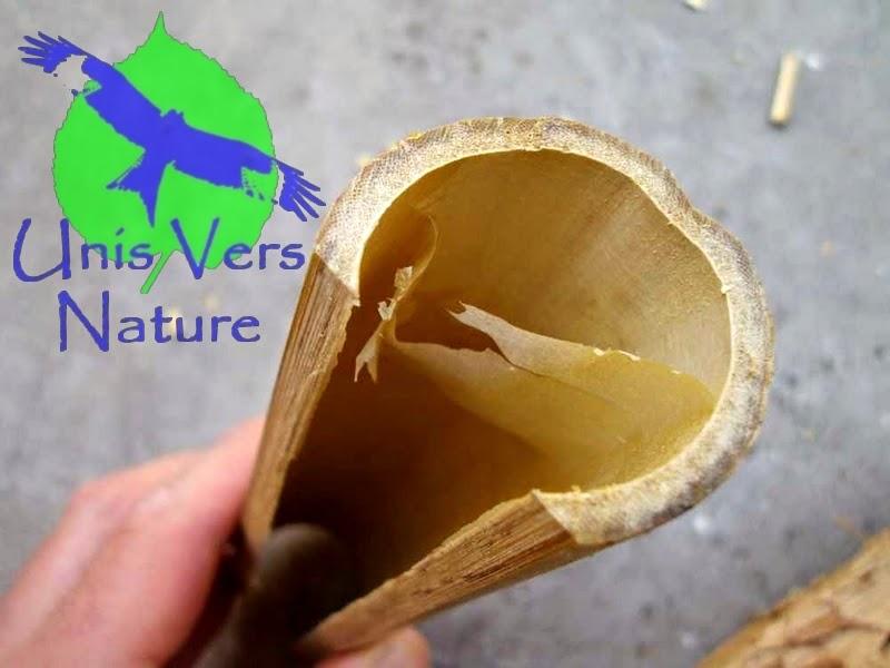 Unis vers nature gourde et harpon en bambou for Objet en bambou a fabriquer
