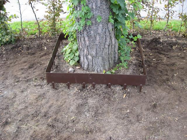 Tips til bruk av bedkanter på uteplassen rundt furua - ja, her ser du den! Furulunden