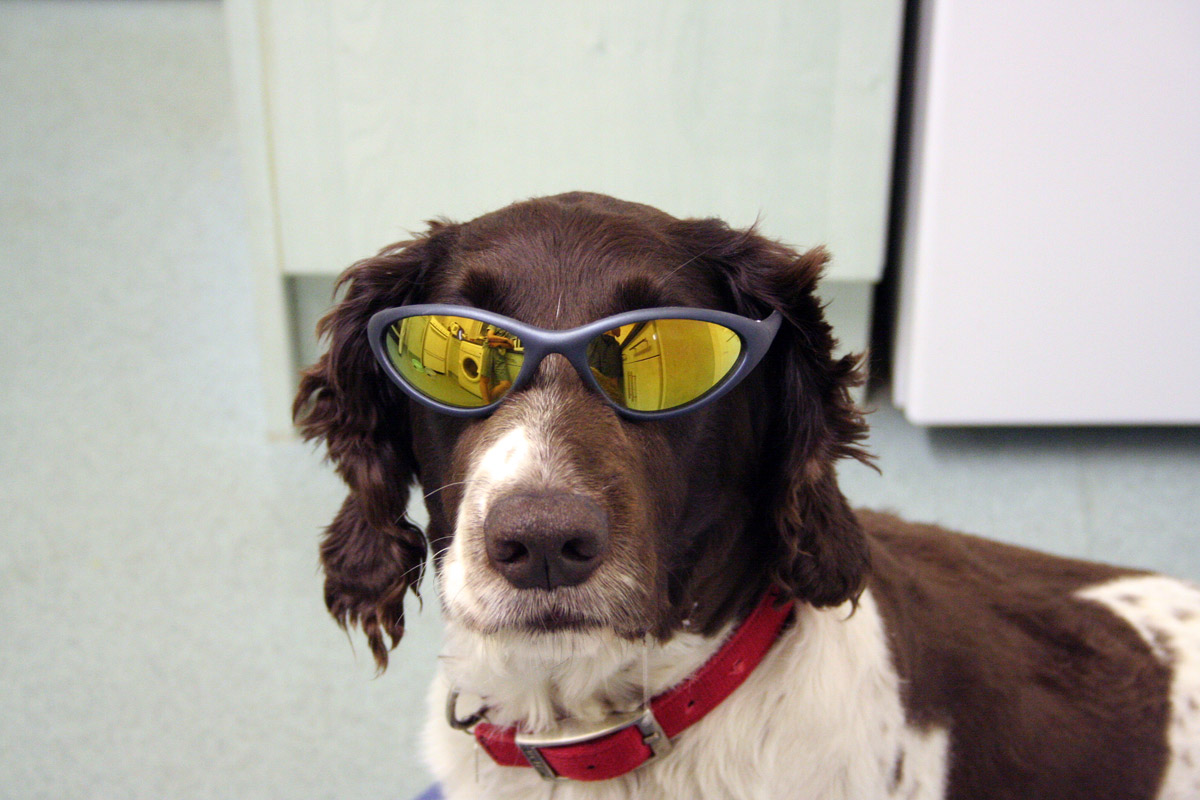 Dogs Wearing Sunglasses New Nice Pictures 2013  Funny Animals
