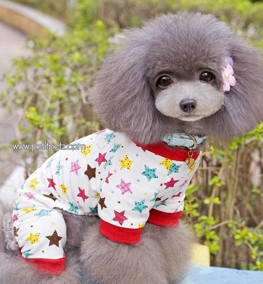 precio bajo promoción especial Tienda online Boutique Petit Petz: Donde comprar Pijamas para chihuahuas ...