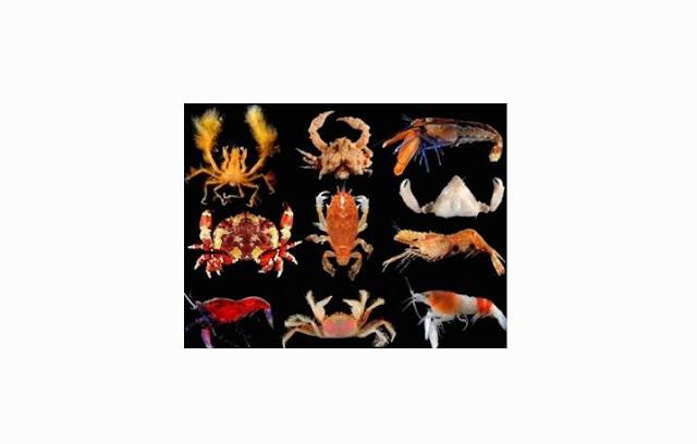 Pengertian dan Ciri Crustacea