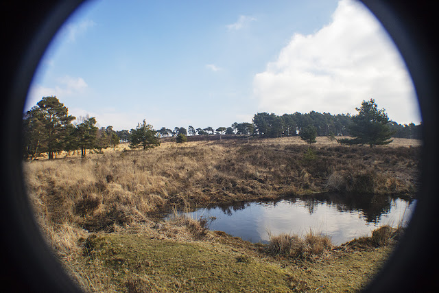 Old Lodge Nature Reserve, Ashdown Forest.  22 February 2018