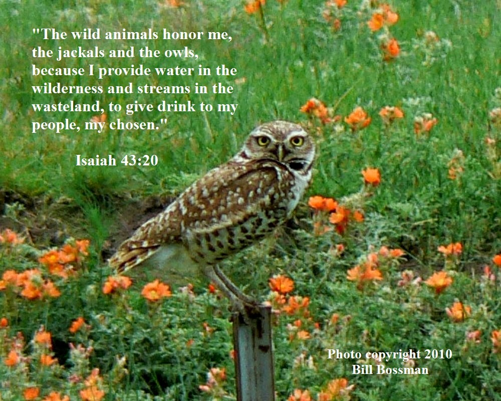 Owl Bible Verses Related Keywords Suggestions Owl Bible Verses