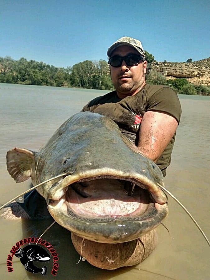 Pesca Con Guía Del Siluro Al Lance Y Pellets En Mequinenza