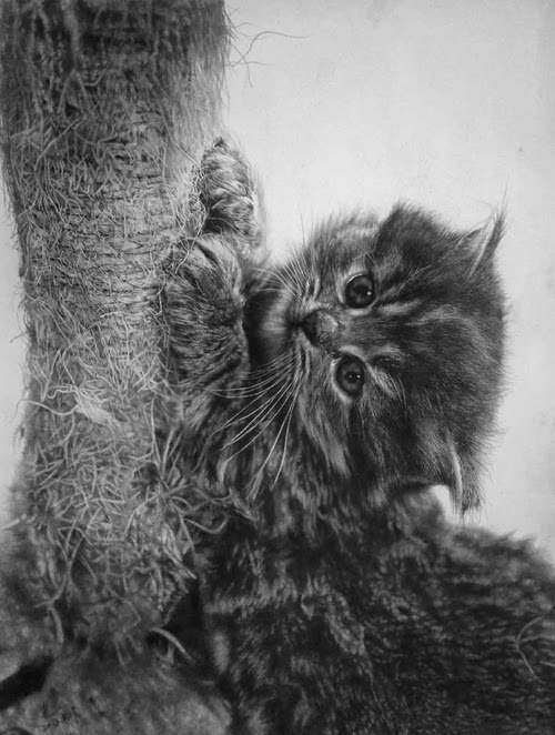 12-Hyper-realistic-Cats-Pencil-Drawings-Hong-Kong-Artist-Paul-Lung-aka-paullung-www-designstack-co
