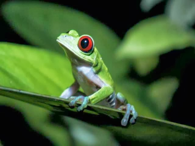 we should protect and preserve our rainforest Who we are projects save rainforests by supporting our projects to reduce slash and burn farming donate to the alternative which works.