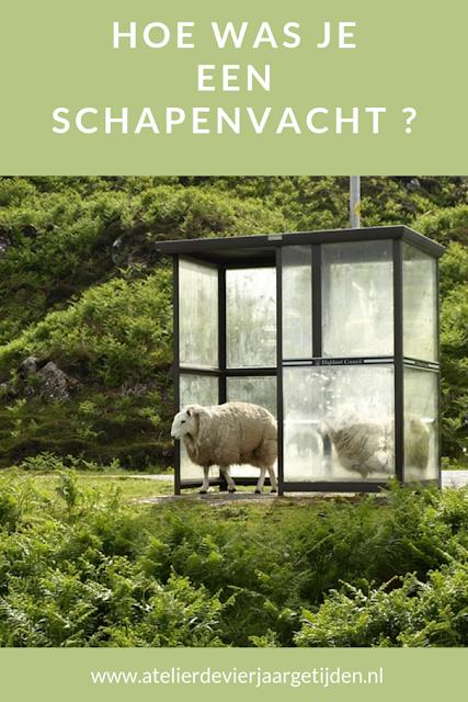Hoe was je een schapenvacht ?