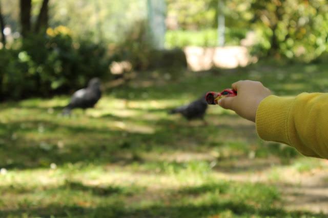dia da mãe + jardins + passeios em família + jardim da estrela + jardins em lisboa